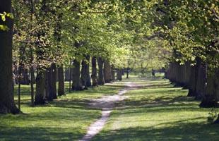 Il parco di Londra in cui si apre il romanzo Mr Gwyn.